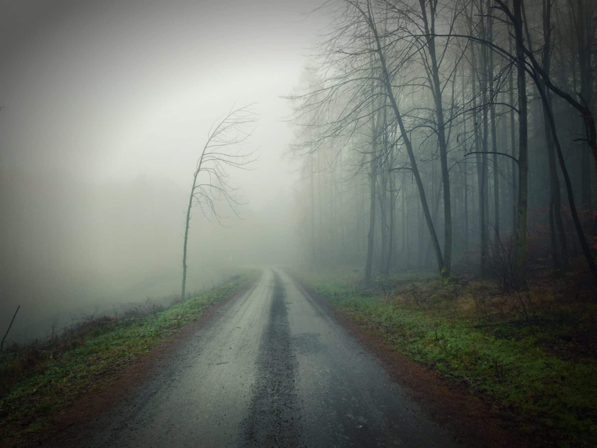 Grey road lined with trees and fog
