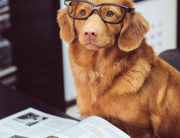 Pros and Cons of Bringing Your Pet to Work
